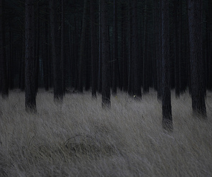 dark, forest, and black image