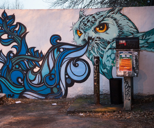 art, owl, and graffiti image