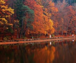 autumn, beautiful, and october image