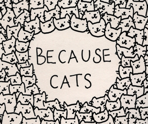 cat and because image