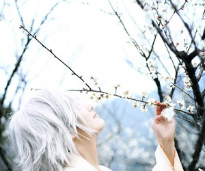 cosplay, plum blossoms, and plum blossom tree image