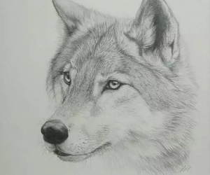 animal, drawning, and wolf image