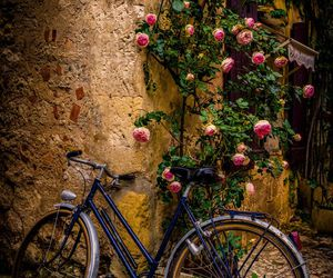 bicycle, rose, and vintage image