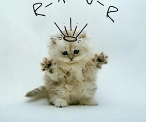 kitten, cat, and rawr image