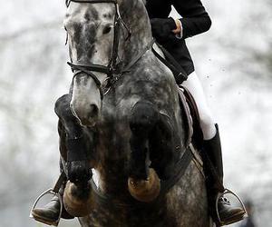 eva, horse, and jesse image
