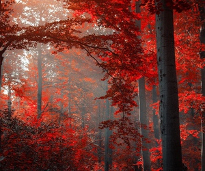 forest, red, and nature image