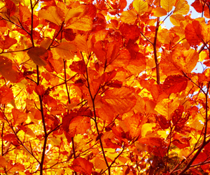 autumn, leave, and leaves image