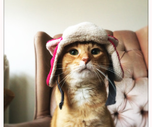 hat, sweet, and animals image