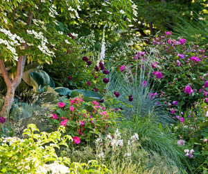 moss roses, ornamental grasses, and portland rose image