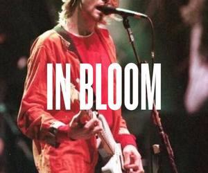 in bloom, kurt cobain, and nirvana image