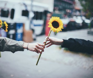 flowers, sunflower, and friends image