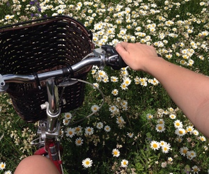 flowers, bike, and green image