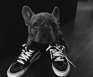 dog and shoes image