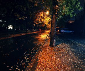 fall, autumn, and night image