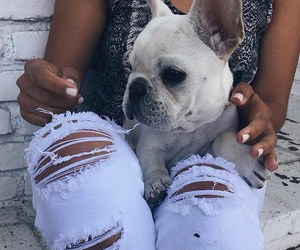 dog, cute, and jeans image