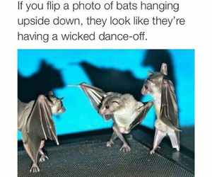bats and funny image