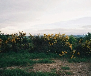 nature, indie, and flowers image