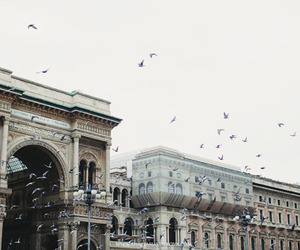 birds, city, and architecture image