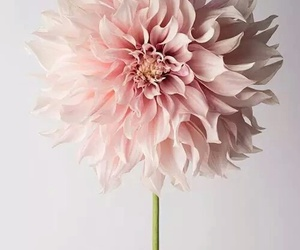 flower, pretty, and ♡ image