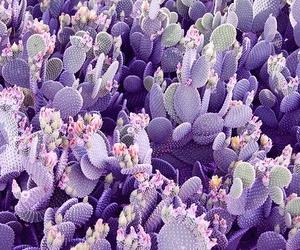 cactus, purple, and plants image