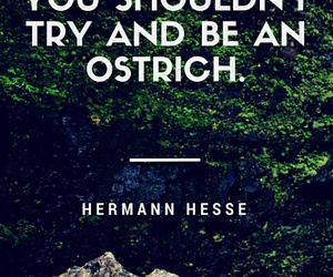 hermann hesse, inspirational, and literature image