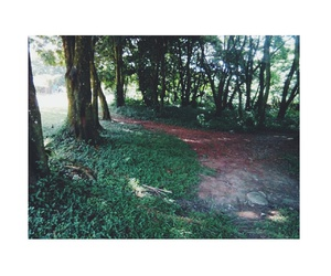 forest, costarica, and green image