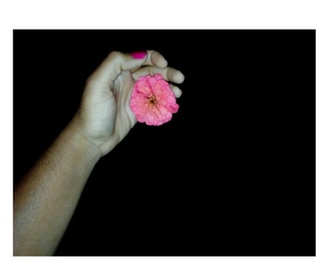 flower, night, and pink image