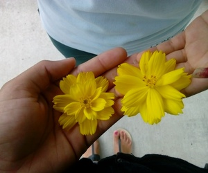 flowers, yellow, and friens image