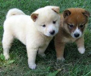 baby animals, dogs, and cute animals image