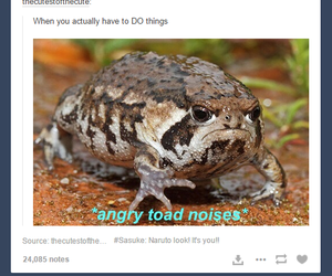 funny and tumblr post image