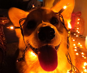 christmas, christmas lights, and dog image