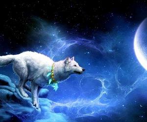 wolf beautiful moon image