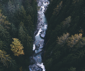 forest, river, and travel image