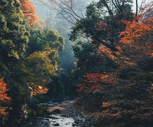 autumn, fall, and japanese image