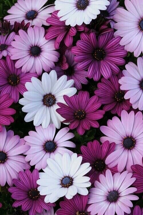 Image About Pink In Flowers By On We Heart It
