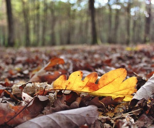 fall, foret, and feuille image