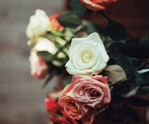 creme, roses, and white image
