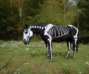 horse, skeleton, and Halloween image