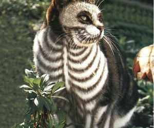 cat, Halloween, and skeleton image
