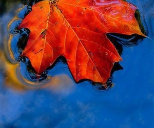 autumn, water, and leaf image