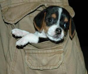 cachorro, perro, and ternura image