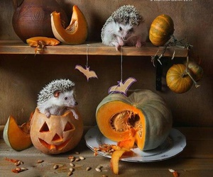 animals and helloween image