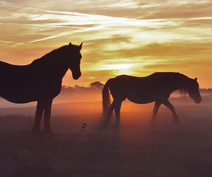 horse and fog image
