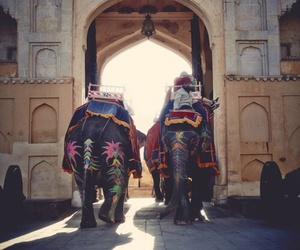 elephant, india, and travel image