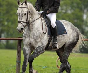 show jumping and horse;boy;equestrian image