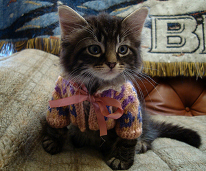 cat, kitten, and sweater image
