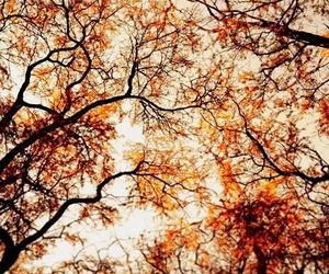 autumn, tree, and fall image