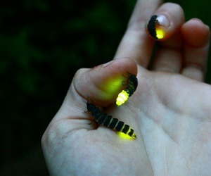 fireflies, light, and hand image