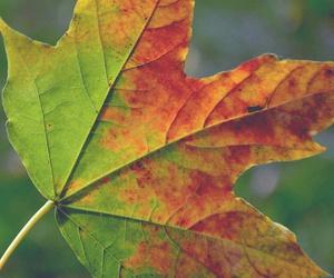 autumn, leaf, and colourful image