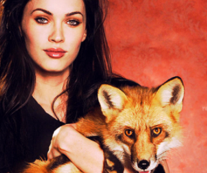 animal, fox, and irony image